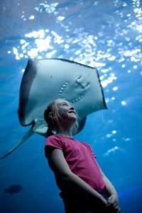 aquarium national Plymouth