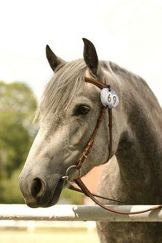 Un séjour linguistique à cheval ?