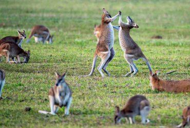 sejour de langue australie