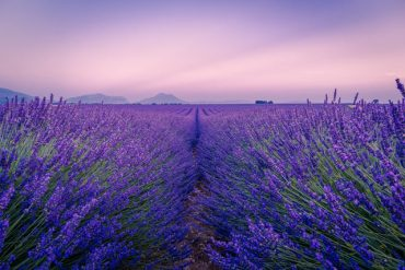 été Provence